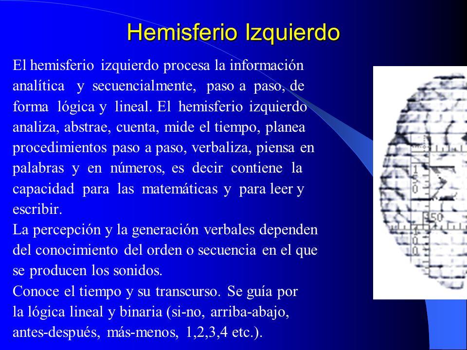 Hemisferio Izquierdo El hemisferio izquierdo procesa la información analítica y secuencialmente, paso a paso, de forma lógica y lineal. El hemisferio