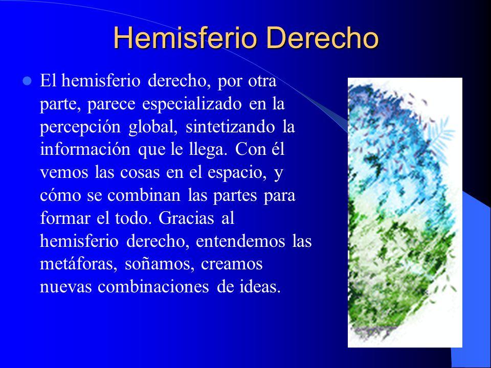 Hemisferio Derecho El hemisferio derecho, por otra parte, parece especializado en la percepción global, sintetizando la información que le llega. Con