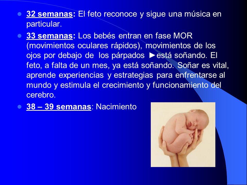 32 semanas: El feto reconoce y sigue una música en particular. 33 semanas: Los bebés entran en fase MOR (movimientos oculares rápidos), movimientos de