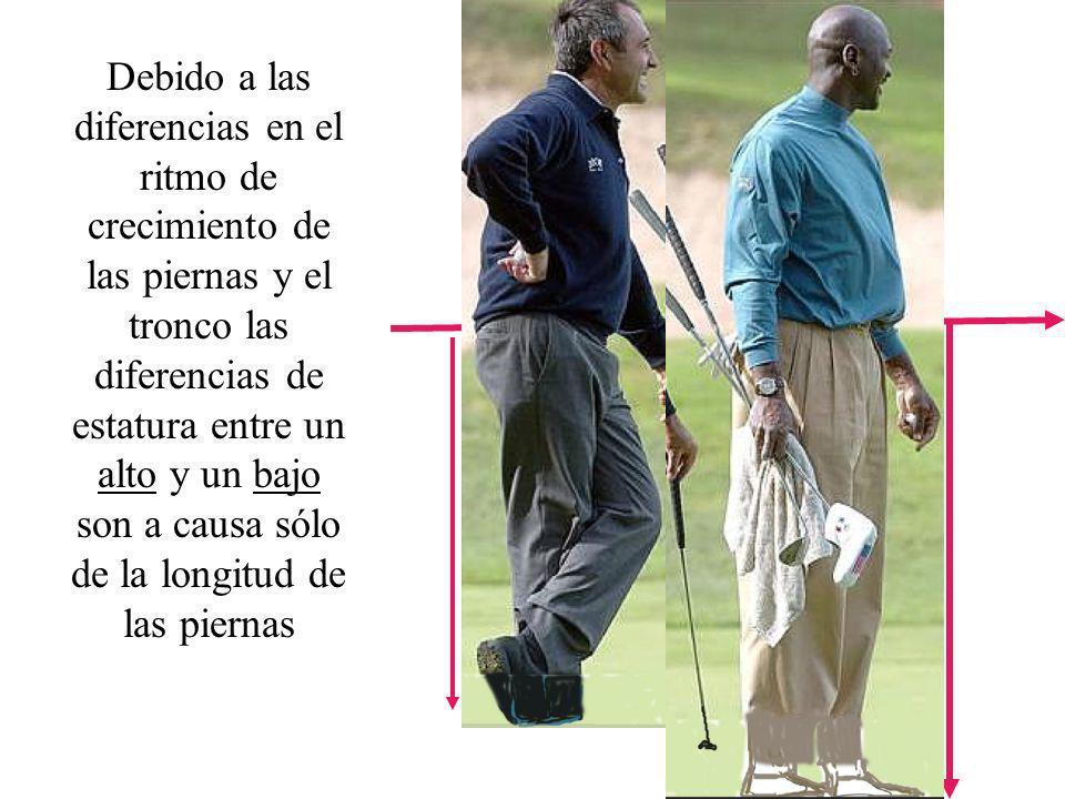 Debido a las diferencias en el ritmo de crecimiento de las piernas y el tronco las diferencias de estatura entre un alto y un bajo son a causa sólo de la longitud de las piernas