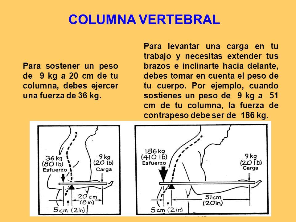 COLUMNA VERTEBRAL Para sostener un peso de 9 kg a 20 cm de tu columna, debes ejercer una fuerza de 36 kg.