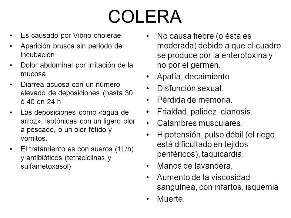 COLERA Es causado por Vibrio cholerae Aparición brusca sin periodo de incubación Dolor abdominal por irritación de la mucosa.