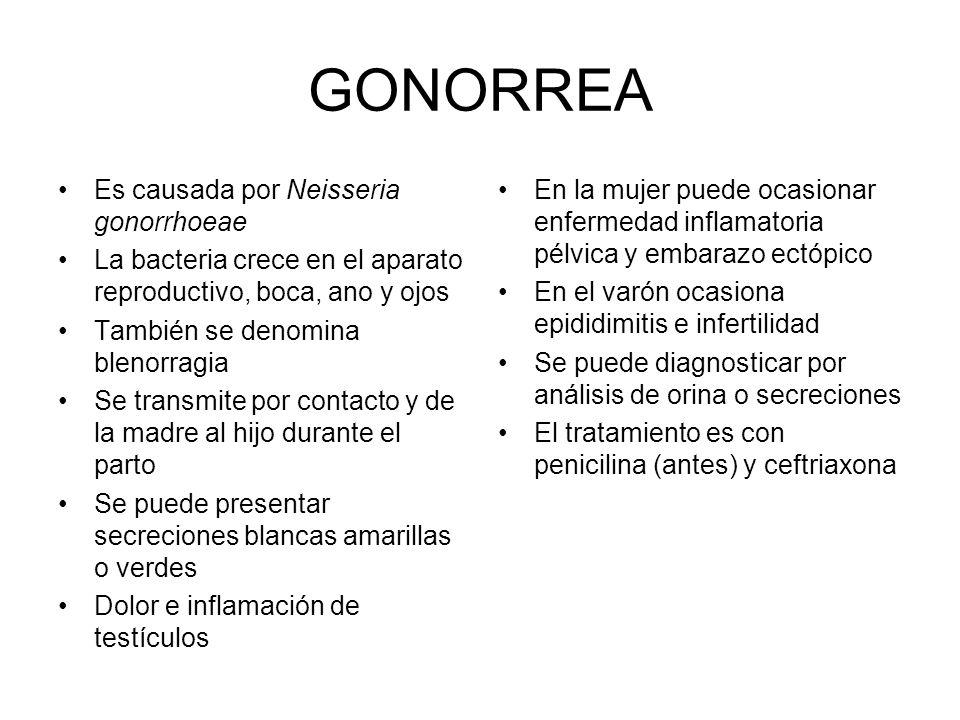 GONORREA Es causada por Neisseria gonorrhoeae La bacteria crece en el aparato reproductivo, boca, ano y ojos También se denomina blenorragia Se transm