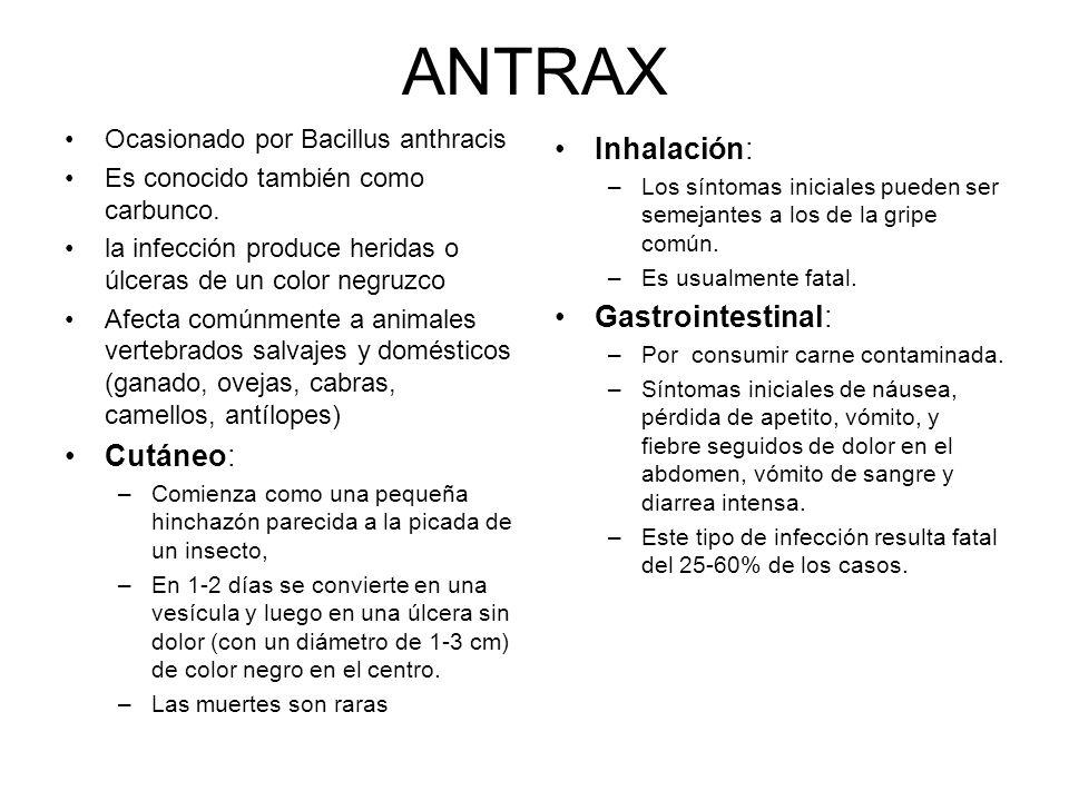 ANTRAX Ocasionado por Bacillus anthracis Es conocido también como carbunco. la infección produce heridas o úlceras de un color negruzco Afecta comúnme