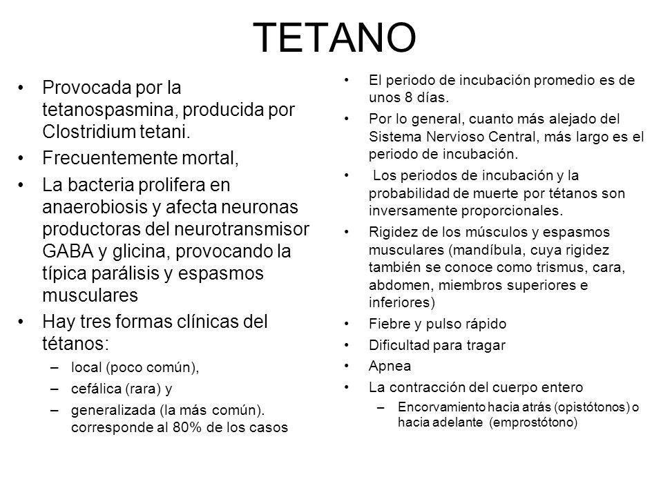 TETANO Provocada por la tetanospasmina, producida por Clostridium tetani. Frecuentemente mortal, La bacteria prolifera en anaerobiosis y afecta neuron