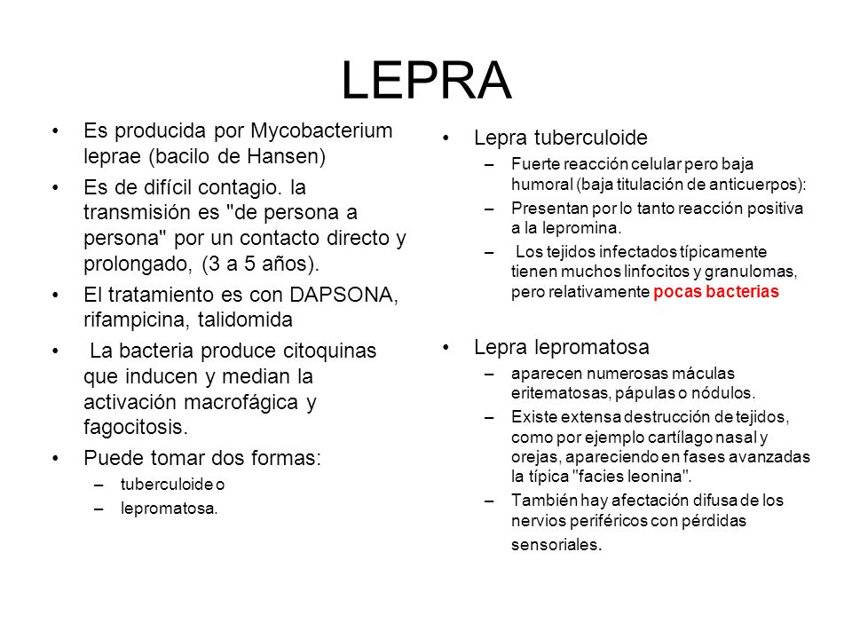 LEPRA Es producida por Mycobacterium leprae (bacilo de Hansen) Es de difícil contagio. la transmisión es