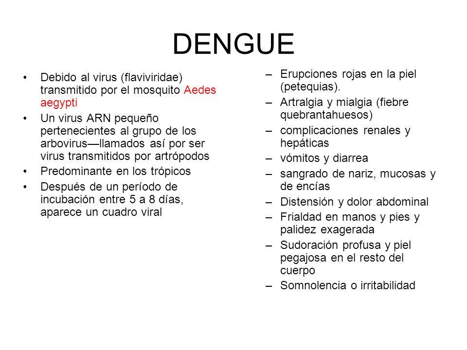 Debido al virus (flaviviridae) transmitido por el mosquito Aedes aegypti Un virus ARN pequeño pertenecientes al grupo de los arbovirusllamados así por