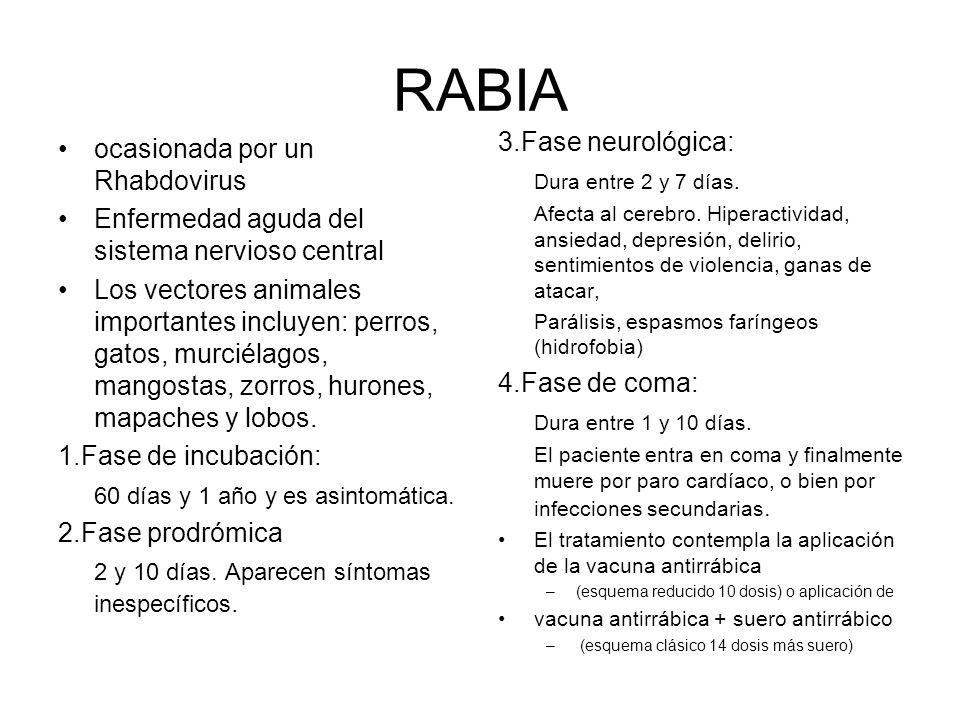 RABIA ocasionada por un Rhabdovirus Enfermedad aguda del sistema nervioso central Los vectores animales importantes incluyen: perros, gatos, murciélagos, mangostas, zorros, hurones, mapaches y lobos.