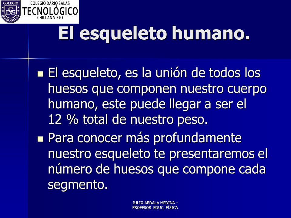 JULIO ABDALA MEDINA - PROFESOR EDUC.FÍSICA El esqueleto humano.