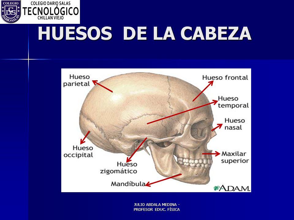 JULIO ABDALA MEDINA - PROFESOR EDUC. FÍSICA HUESOS DE LA CABEZA