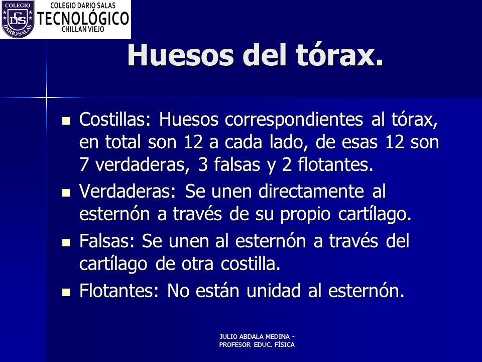 JULIO ABDALA MEDINA - PROFESOR EDUC.FÍSICA Huesos del tórax.