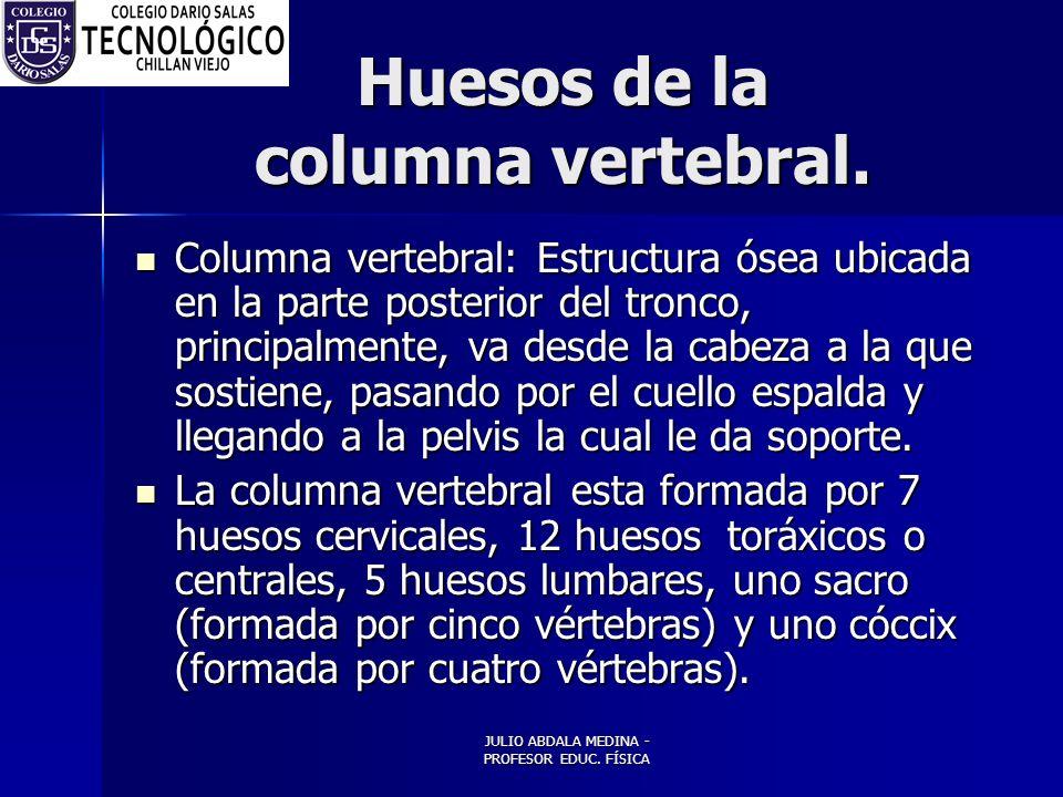 JULIO ABDALA MEDINA - PROFESOR EDUC.FÍSICA Huesos de la columna vertebral.