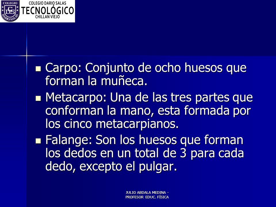JULIO ABDALA MEDINA - PROFESOR EDUC.FÍSICA Carpo: Conjunto de ocho huesos que forman la muñeca.