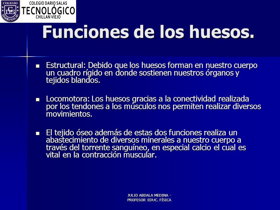 JULIO ABDALA MEDINA - PROFESOR EDUC.FÍSICA Funciones de los huesos.