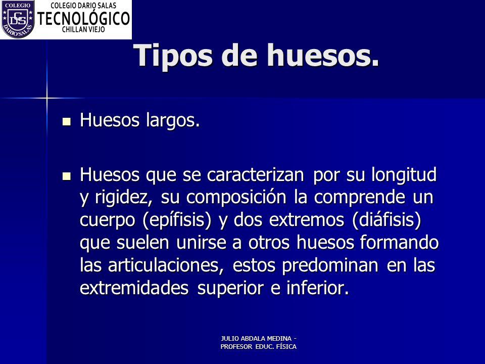 JULIO ABDALA MEDINA - PROFESOR EDUC.FÍSICA Tipos de huesos.