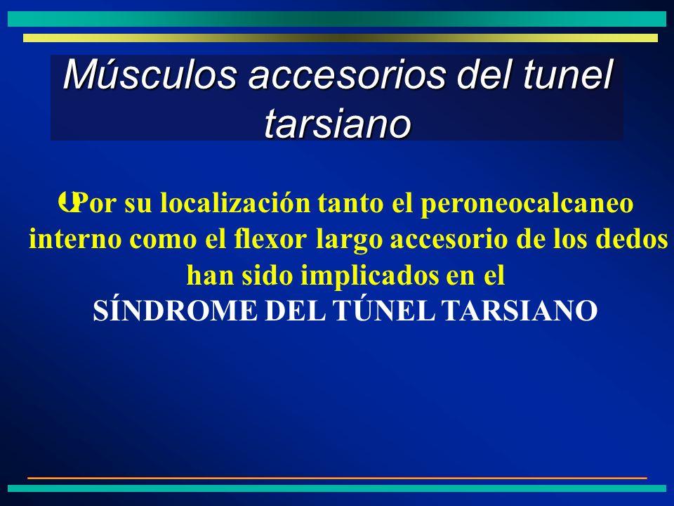 Músculos accesorios del tunel tarsiano ÞPor su localización tanto el peroneocalcaneo interno como el flexor largo accesorio de los dedos han sido impl