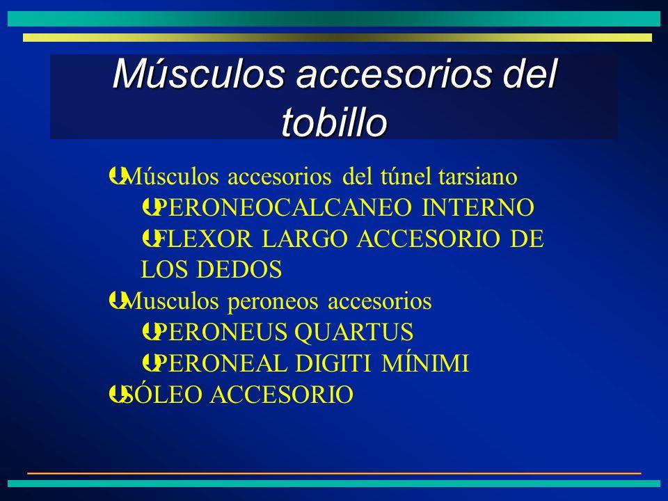 Músculos accesorios del tobillo ÞMúsculos accesorios del túnel tarsiano ÞPERONEOCALCANEO INTERNO ÞFLEXOR LARGO ACCESORIO DE LOS DEDOS ÞMusculos perone