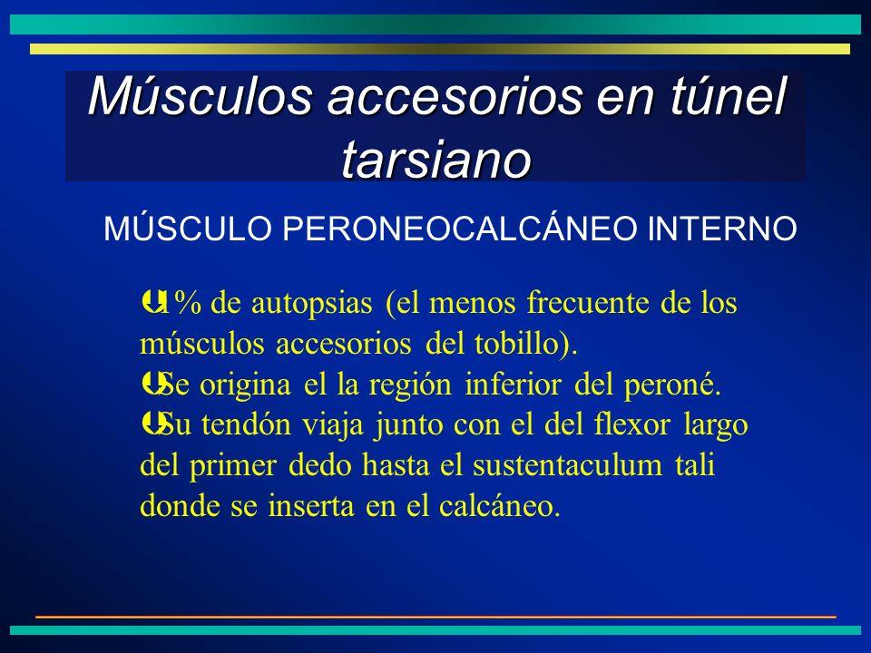 Músculos accesorios en túnel tarsiano Þ1% de autopsias (el menos frecuente de los músculos accesorios del tobillo). ÞSe origina el la región inferior
