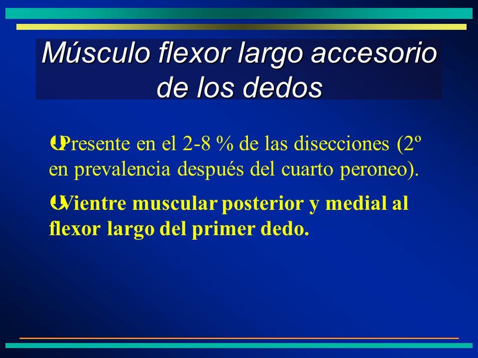 Músculo flexor largo accesorio de los dedos ÞVientre muscular posterior y medial al flexor largo del primer dedo. ÞPresente en el 2-8 % de las disecci