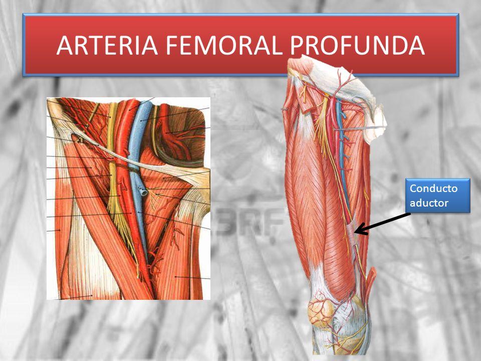 Vistoso Anatomía Superficial Vena Femoral Cresta - Anatomía de Las ...