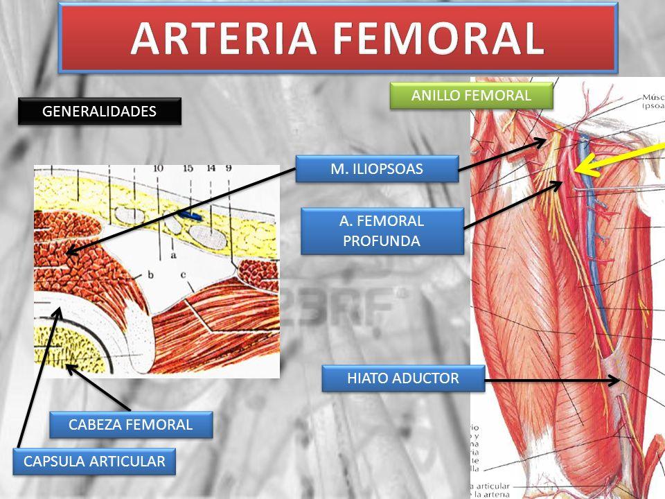 ARTÉRIA POPLÍTEA GENERALIDADES ARTERIA FEMORAL HIATO ADUCTOR ARTERIA POPLITEA ARCO DEL SÓLEO ARTERIA TIBIAL POSTERIOR ARTERIA TIBIAL ANTERIOR