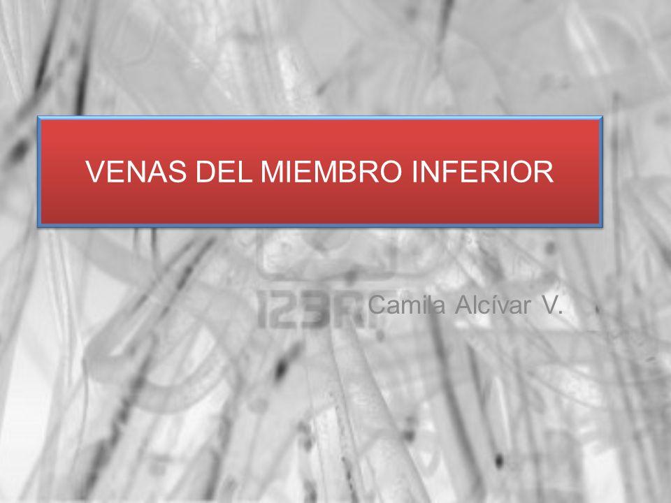 Camila Alcívar V. VENAS DEL MIEMBRO INFERIOR