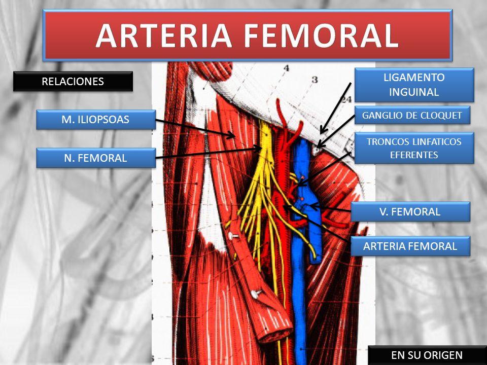 RELACIONES EN SU ORIGEN M. ILIOPSOAS ARTERIA FEMORAL N. FEMORAL V. FEMORAL TRONCOS LINFATICOS EFERENTES GANGLIO DE CLOQUET LIGAMENTO INGUINAL