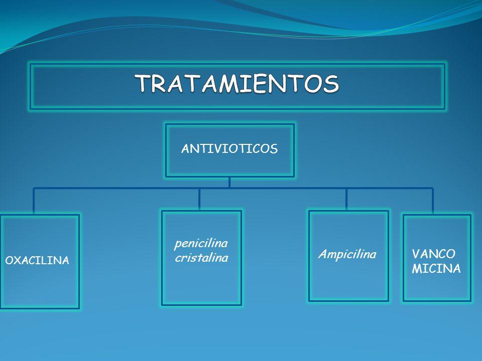 ANTIVIOTICOS OXACILINA penicilina cristalina AmpicilinaVANCO MICINA