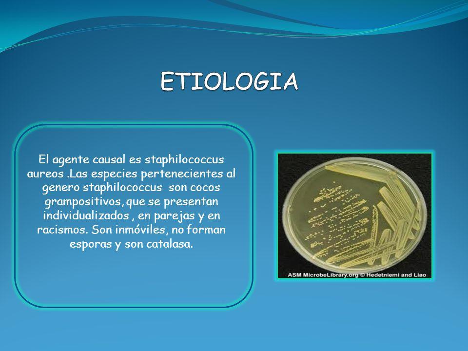 El agente causal es staphilococcus aureos.Las especies pertenecientes al genero staphilococcus son cocos grampositivos, que se presentan individualiza