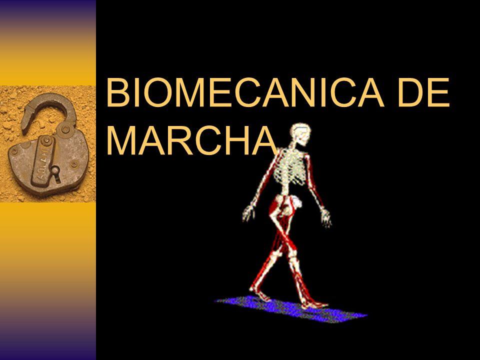 DEFINICIÓN Es el conjunto de movimientos coordinados y alternos de los brazos piernas y tronco, para desplazar el tronco hacia delante.