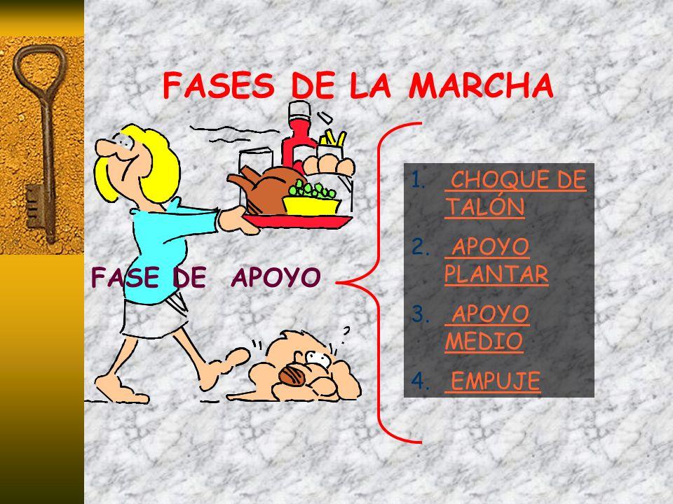 FASES DE LA MARCHA FASE DE APOYO 1. CHOQUE DE TALÓN CHOQUE DE TALÓN 2. APOYO PLANTAR APOYO PLANTAR 3. APOYO MEDIO APOYO MEDIO 4. EMPUJE EMPUJE