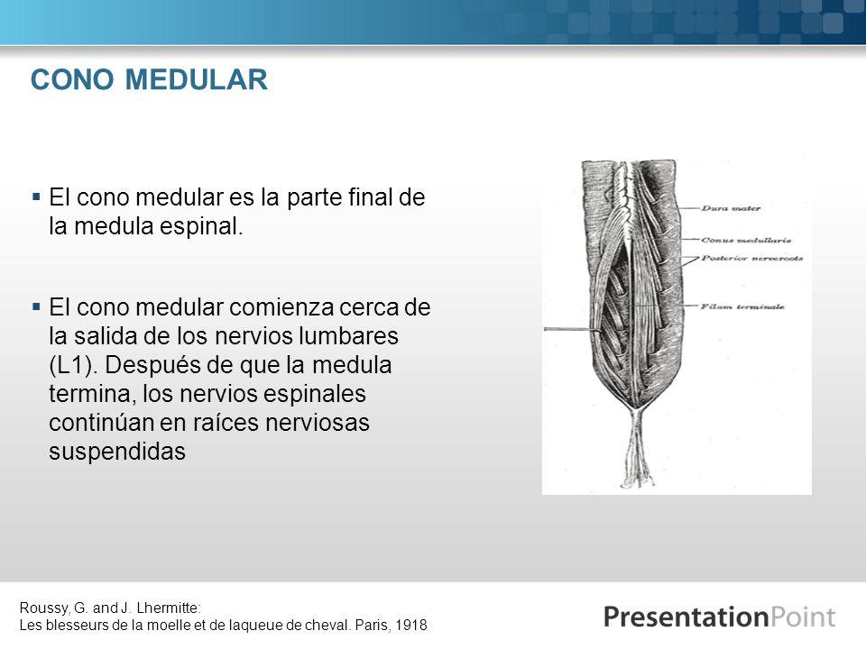 CONO MEDULAR El cono medular es la parte final de la medula espinal. El cono medular comienza cerca de la salida de los nervios lumbares (L1). Después