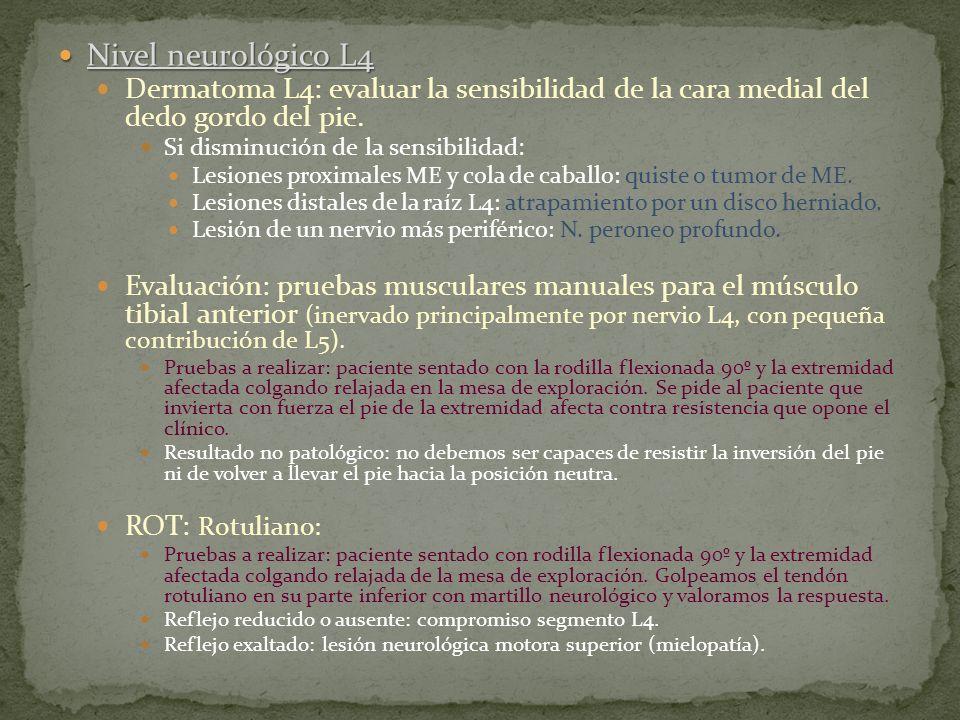 Nivel neurológico L4 Nivel neurológico L4 Dermatoma L4: evaluar la sensibilidad de la cara medial del dedo gordo del pie. Si disminución de la sensibi
