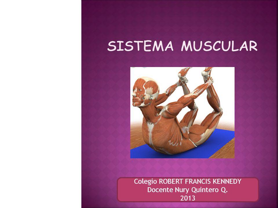 Es el conjunto de mas de 600 músculos, cuya principal función es generar movimiento.