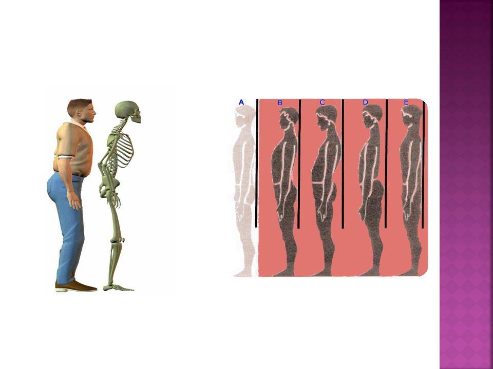 Sirve como defensa y protege a ciertos órganos del cuerpo.