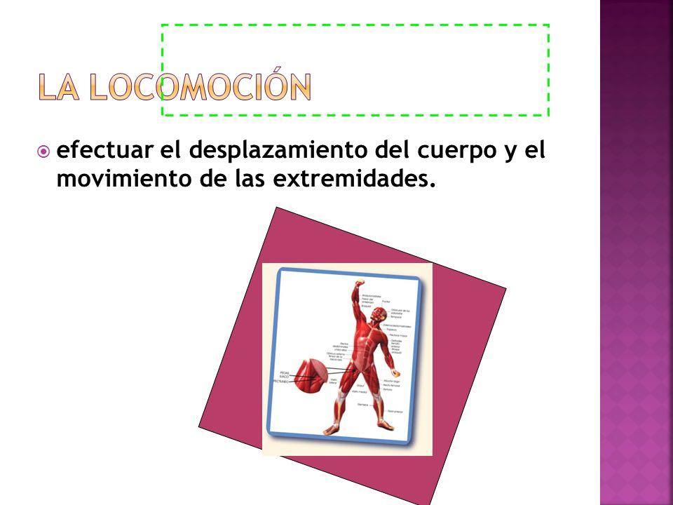 efectuar el desplazamiento del cuerpo y el movimiento de las extremidades.