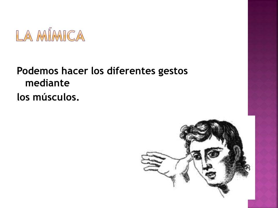 Podemos hacer los diferentes gestos mediante los músculos.