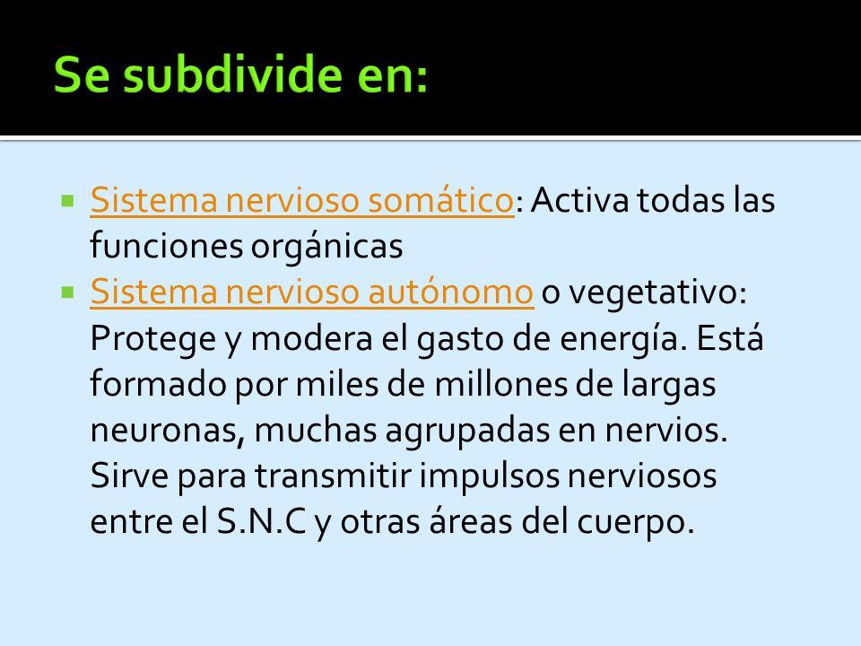 Nervio Origen Distribución Dorsal de la escápulaC5.Músculos angulares del omoplato, romboides mayor y romboides menor.