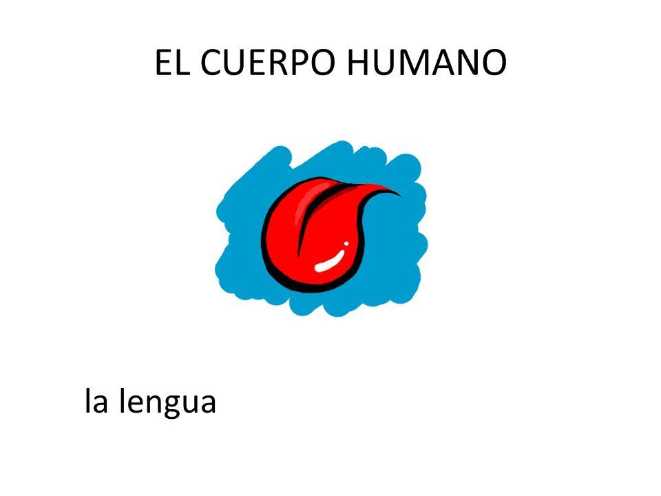 EL CUERPO HUMANO la lengua