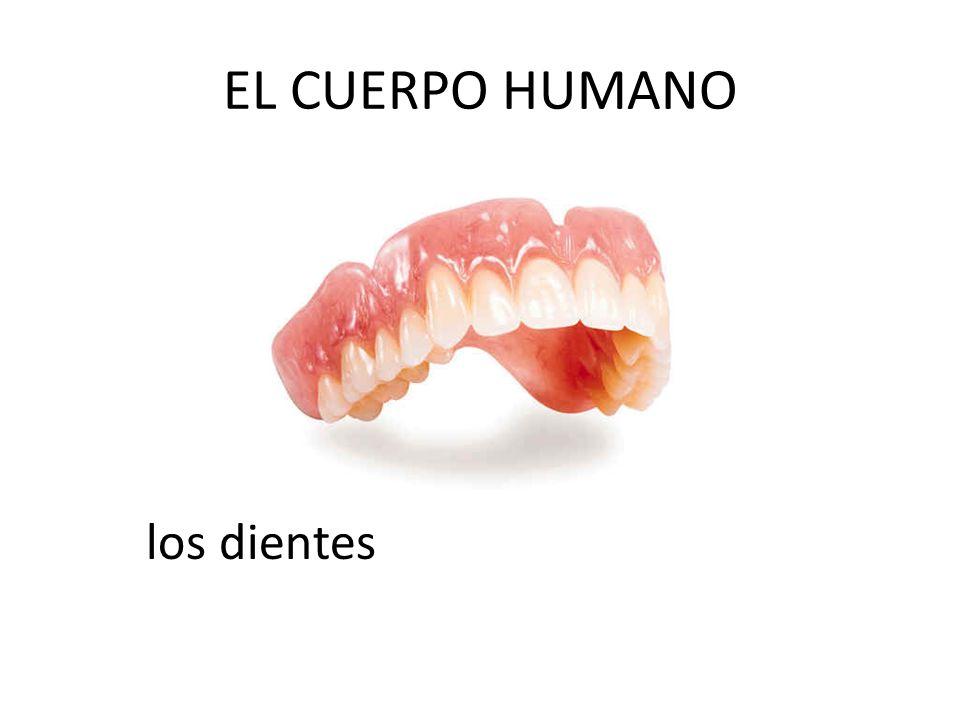 EL CUERPO HUMANO los dientes