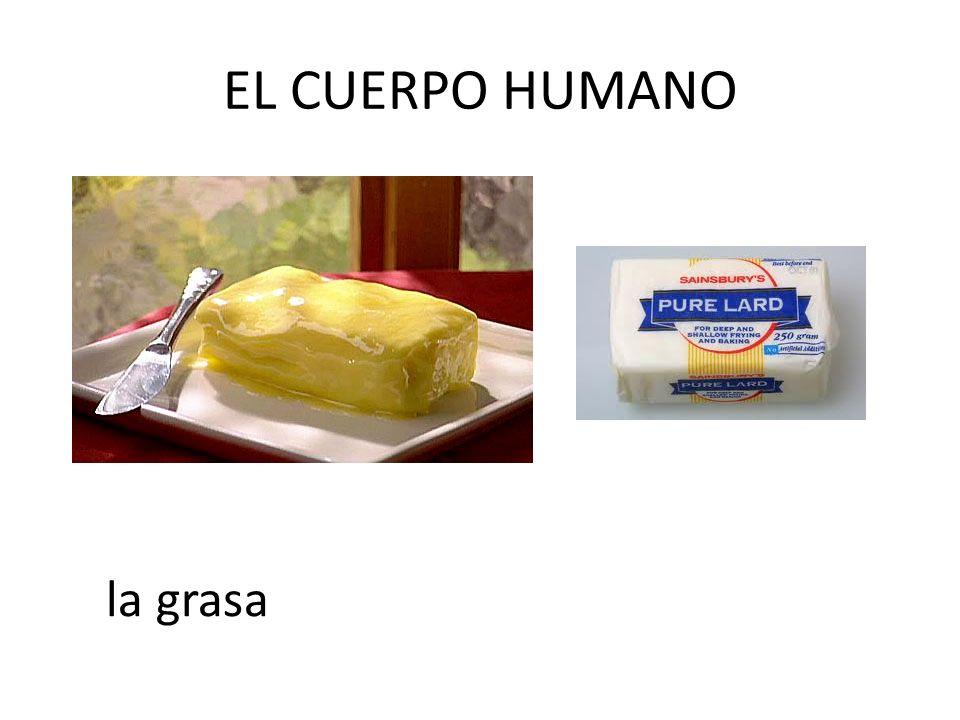 EL CUERPO HUMANO la grasa