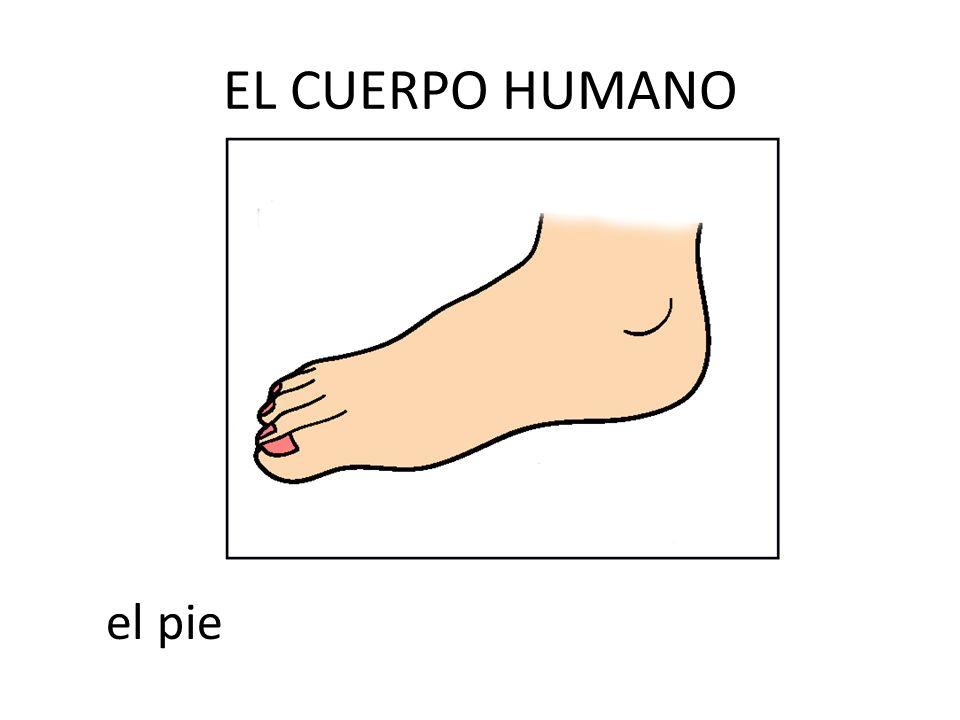 EL CUERPO HUMANO el pie