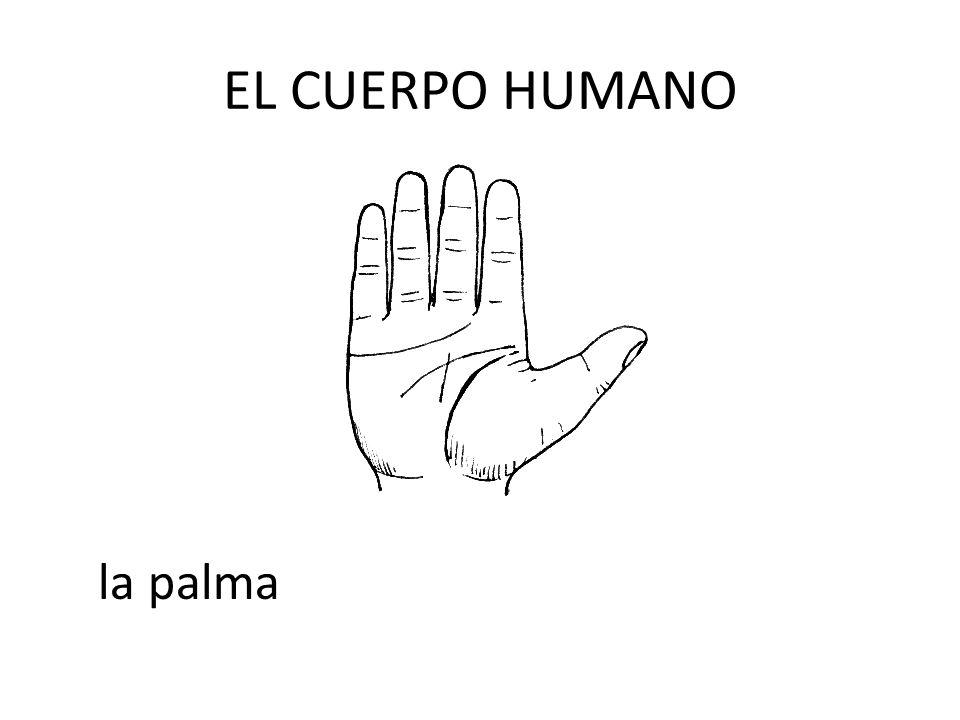 EL CUERPO HUMANO la palma