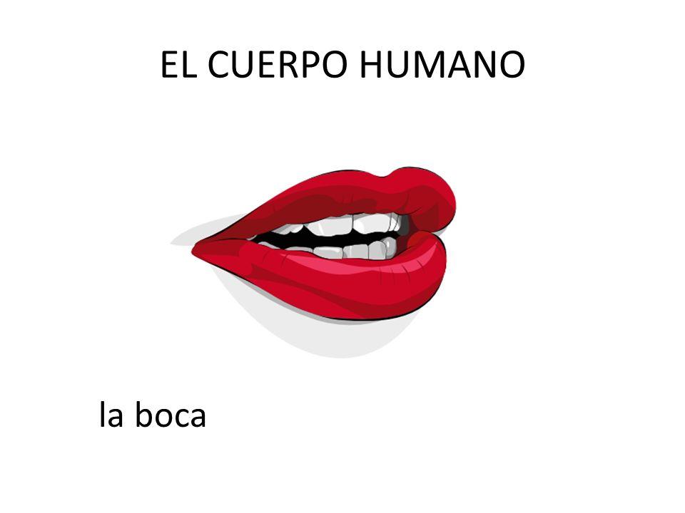 EL CUERPO HUMANO la boca