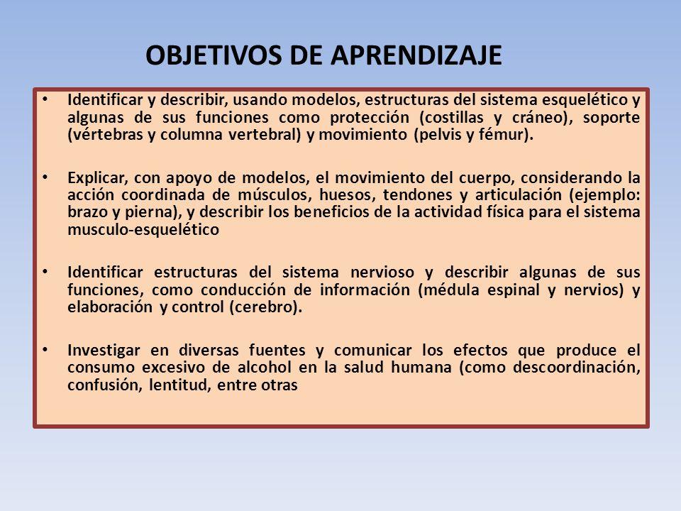 OBJETIVOS DE APRENDIZAJE Identificar y describir, usando modelos, estructuras del sistema esquelético y algunas de sus funciones como protección (cost