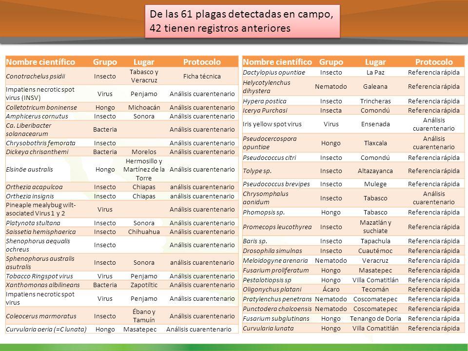 De las 61 plagas detectadas en campo, 42 tienen registros anteriores Nombre científicoGrupoLugarProtocolo Conotrachelus psidiiInsecto Tabasco y Veracr