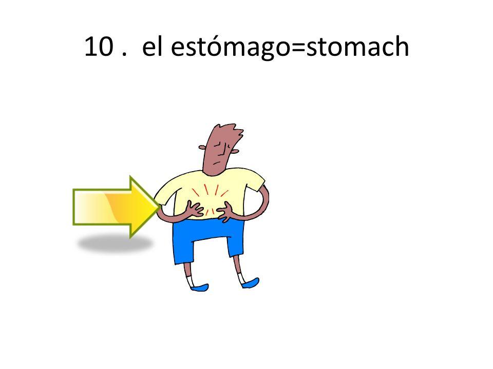 10. el estómago=stomach