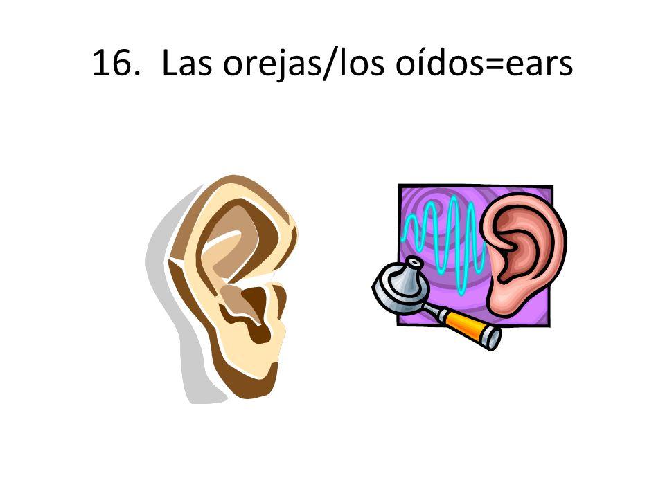 16. Las orejas/los oídos=ears