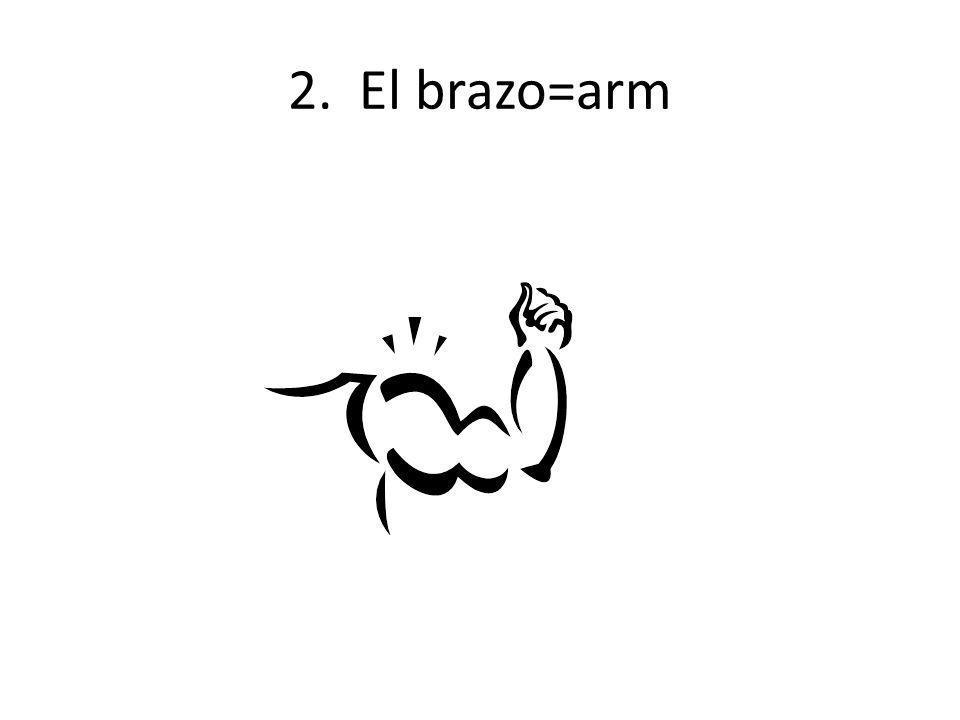 2. El brazo=arm
