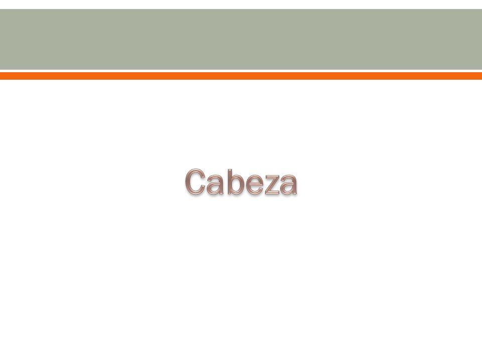 CARACTERISTICAS DEL CABELLO: Implantación capilar Alopecia: caída del cabello.